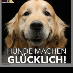 Hundepension heilbronn