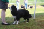 Border Collie-Deckrüde in Nordrhein-Westfalen (1. Ergebnis)