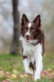 Foto: Border Collie