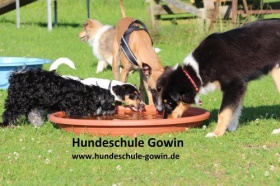 Hundepension gowin guetersloh