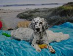 English Setter-Hundezüchter in Nordrhein-Westfalen (1. Ergebnis)