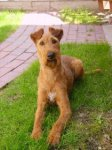 Irish Terrier-Hundezüchter in Nordrhein-Westfalen (5. Ergebnis)