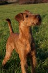 Irish Terrier-Hundezüchter in Nordrhein-Westfalen (3. Ergebnis)