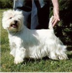 West Highland White Terrier-Hundezüchter (1. Ergebnis)
