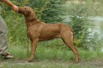 Chesapeake Bay Retriever-Hundezüchter (7. Ergebnis)
