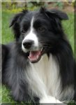 Border Collie-Hundezüchter in Nordrhein-Westfalen (1. Ergebnis)