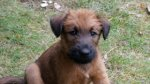 Irish Terrier-Hundezüchter in Brandenburg (141. Ergebnis)