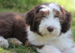 Bearded Collie-Hundezüchter in Saarland (1. Ergebnis)