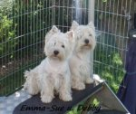 West Highland White Terrier-Hundezüchter in Hessen (1. Ergebnis)
