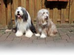 Bearded Collie-Hundezüchter in Nordrhein-Westfalen (2. Ergebnis)
